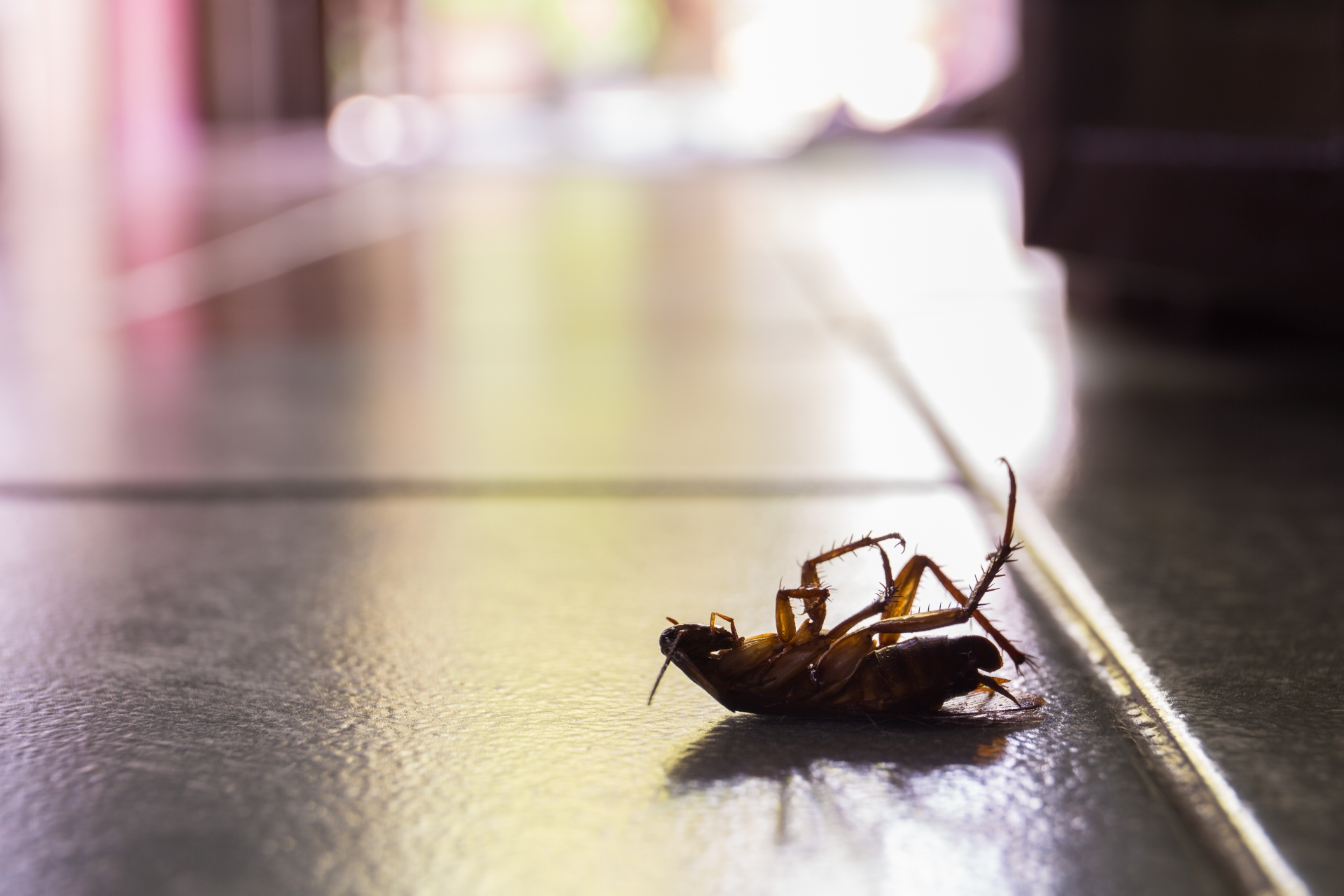 Cockroach Control, Pest Control in Hornchurch, RM11, RM12. Call Now 020 8166 9746