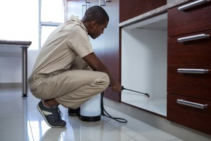 Pest Inspection, Pest Control in Hornchurch, RM11, RM12. Call Now 020 8166 9746